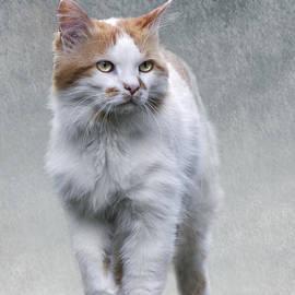 Cat on texture - 01