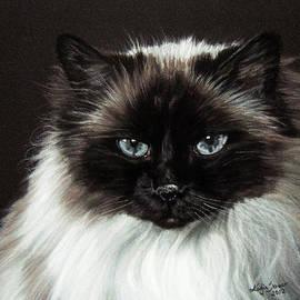 Katja Sauer - Cat with blue eyes