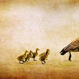 Lisa Knechtel - Catch Up Little Gosling