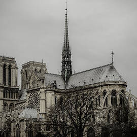 Marco Oliveira - Cathedral of Notre Dame de Paris