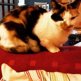 Flick Chalmers - #catsofinstagram #ruby