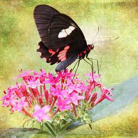 Laura Duhaime - Cattleheart Butterfly Textured