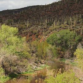 Ed  Cheremet - Cave Creek Arizona