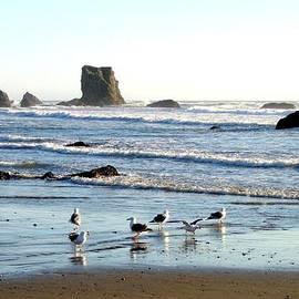 Will Borden - Cavorting Seagulls