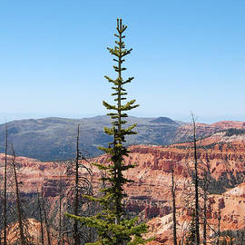 Debra Thompson - Cedar Breaks and Pine Tree