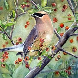 Patricia Pushaw - Cedar Waxwing On Berry Branch