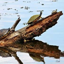 Cynthia Guinn - Happy Family Of Turtles