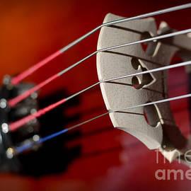 Ashley Berg - Cello Strings