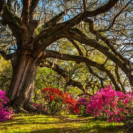 Dave Allen - Charleston SC Magnolia Plantation - Southern Hospitality