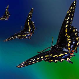 Lowell Monke - Chasing Butterflies