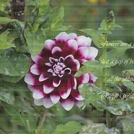 Sonali Gangane - Checkered Beauty