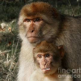 Mickey At Rawshutterbug - Cheeky Baby Monkey