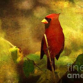 Lianne Schneider - Cheery Red Cardinal