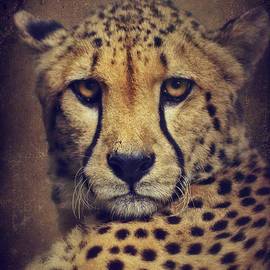 Angela Doelling AD DESIGN Photo and PhotoArt - Cheetah
