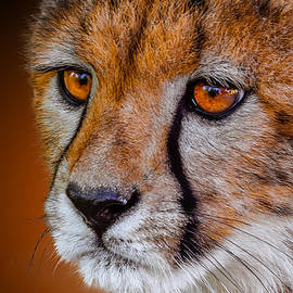 Brian Stevens - Cheetah Cub