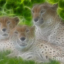 Gary Gingrich Galleries - Cheetahs-6325-Fractal