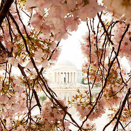 Susan  Schmitz - Cherry Blossom Flowers in Washington DC