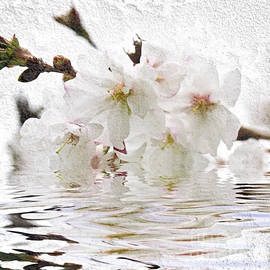 Elena Elisseeva - Cherry blossom in water