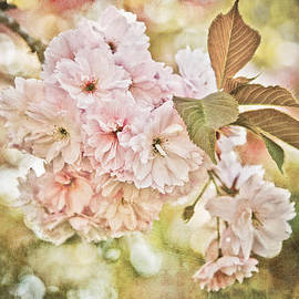 Loriental Photography - Cherry Blossom