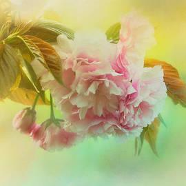 Jai Johnson - Cherry Blossoms in Spring