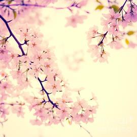 Sonja Quintero - Cherry Blossoms Squared