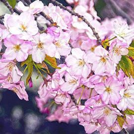 Steven Barrows - Cherry Blossoms Tidal Basin Wahington D.C.