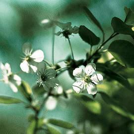 Alexander Senin - Cherry In Bloom 2