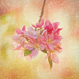 Kim Hojnacki - Cherry Jubilee