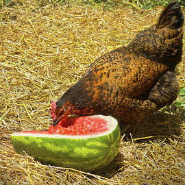 Sandi OReilly - Chicken And Her Watermelon