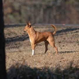 Chihuahua 15-01