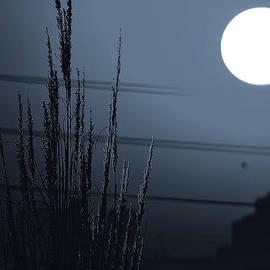 V Naveen  Kumar - Chilly night 1