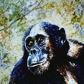 Hartmut Jager - Chimpanzee
