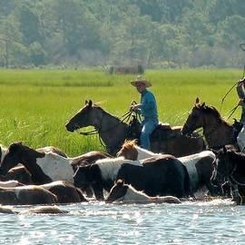 Kim Bemis - Chincoteague Wild Pony Swim