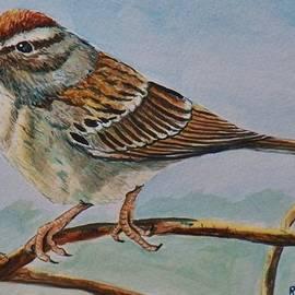 Richard Goohs - Chipping Sparrow
