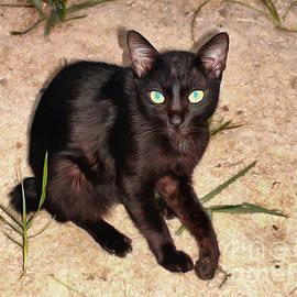 Sergey Lukashin - Chocolate Cat from the island of Tioman