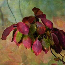 Shirley Sirois - Chokecherry Leaves