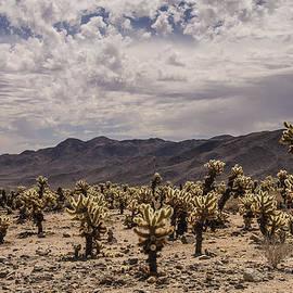 Lee Kirchhevel - Cholla Cactus Garden