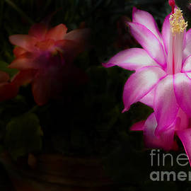 Mike Nellums - Christmas Cactus