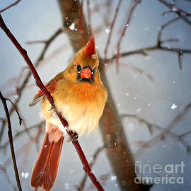 Nava Thompson - Northern Cardinal Snow Scene