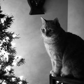 Larysa Luciw - Christmas Cat