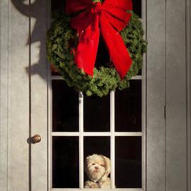 Mike Savad - Christmas - Clinton NJ - Christmas puppy