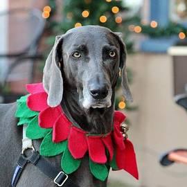Cynthia Guinn - Christmas Dog