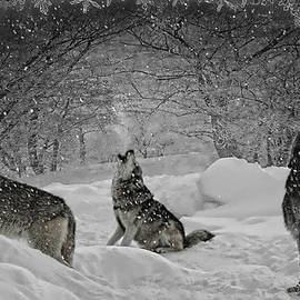 Wes and Dotty Weber - Christmas Eve Howling D7345