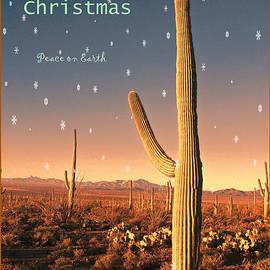 Barbara Manis - Christmas in the Desert