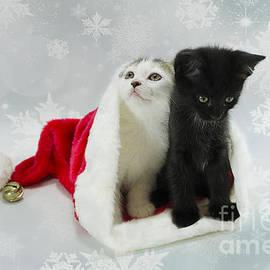 Nicole Markmann Nelson - Christmas Kitten