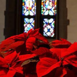 David T Wilkinson - Christmas Poinsettia