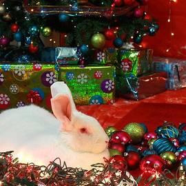 Amanda Stadther - Christmas Rabbit