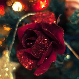 Andrea Mazzocchetti - Christmas Rose