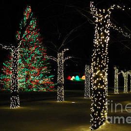 Nancy Mueller - Christmas Trees at Night