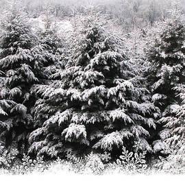 Katie Wing Vigil - Christmas Trees